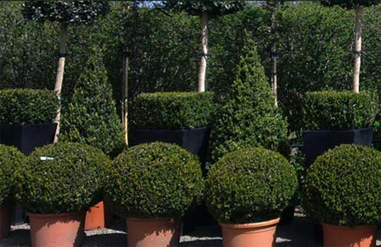 Trees & Topiaries